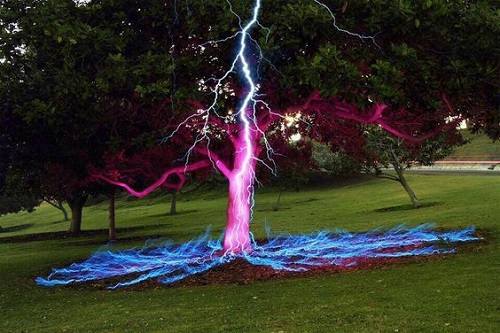lightening-bolt-tree-1