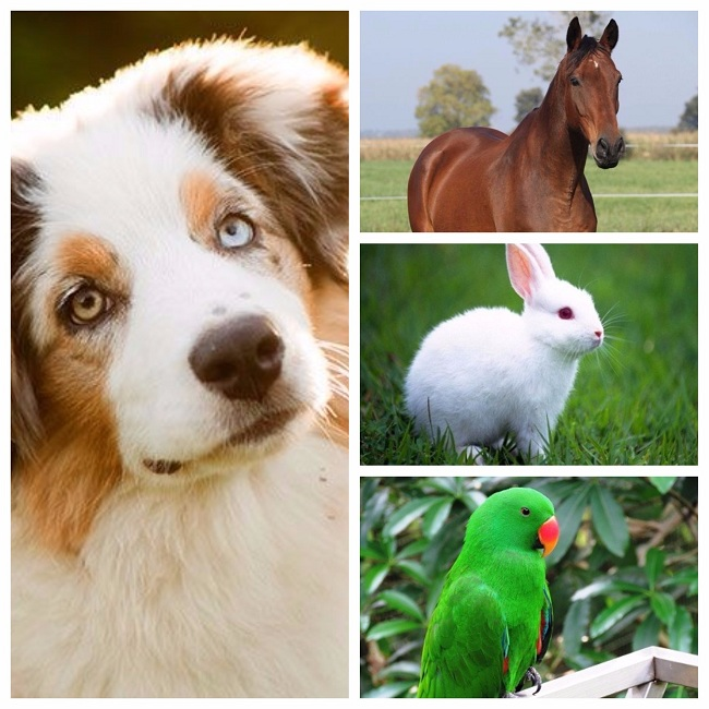 pet-animals