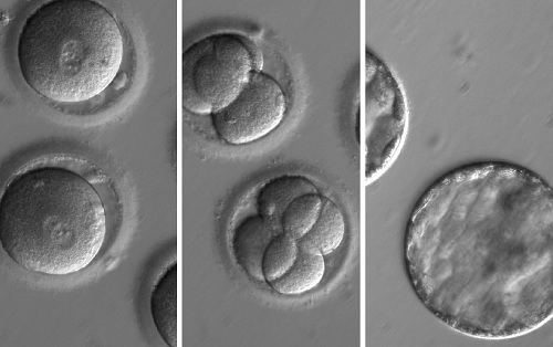 embryo-editing