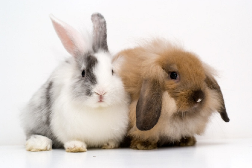 Cute-rabbits