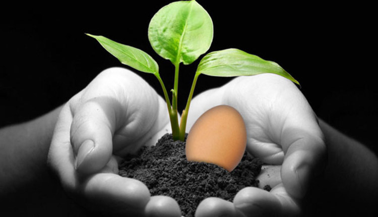 use boiled egg water in plants